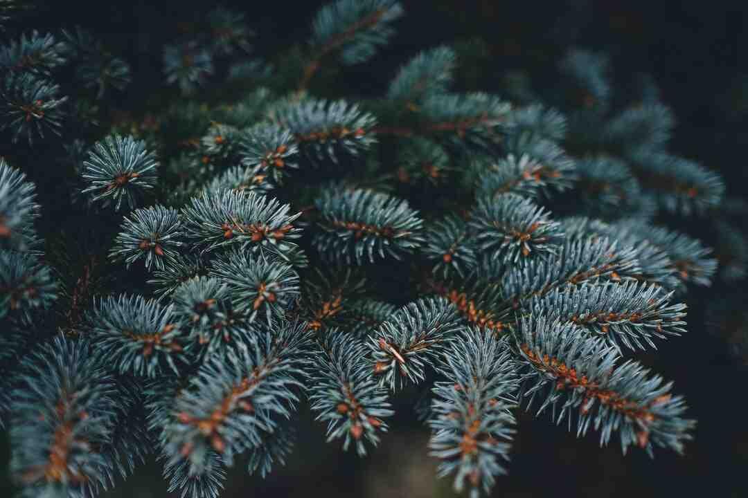 Comment décorer un sapin de Noël naturel ?